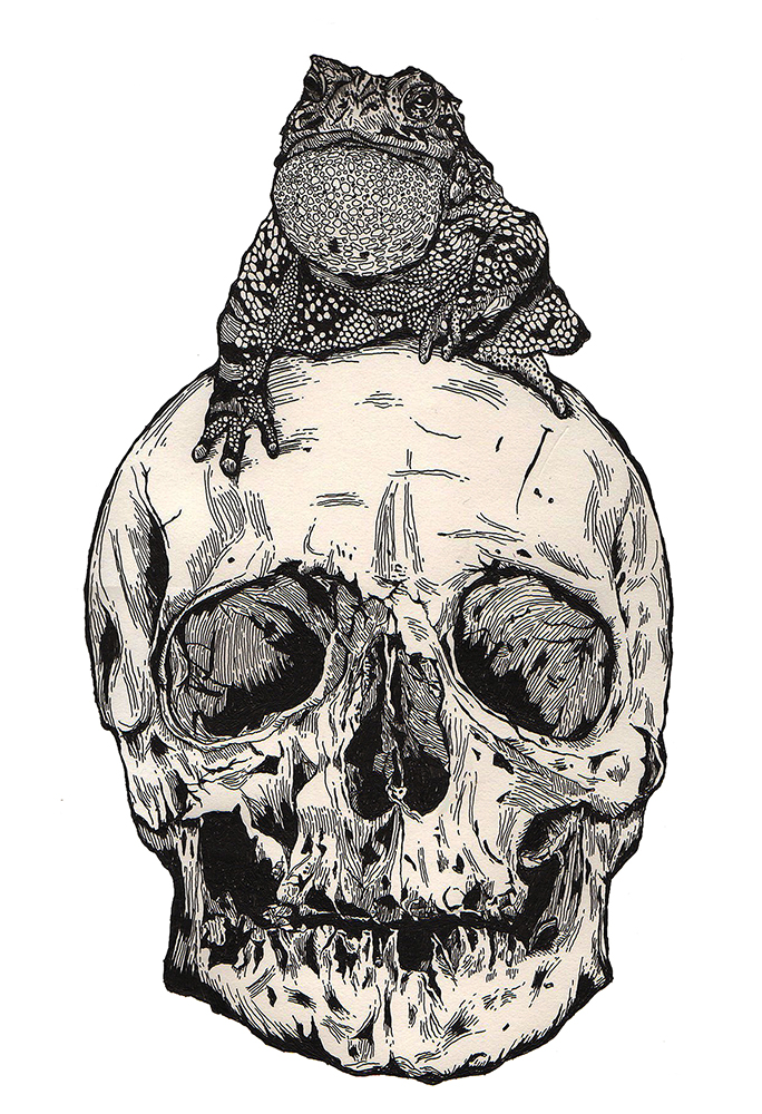 TOAD ON THE SKULL
