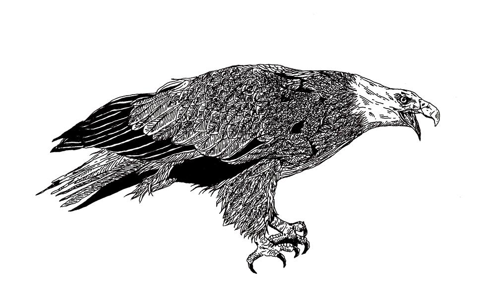 DIGAWELL Eagle3